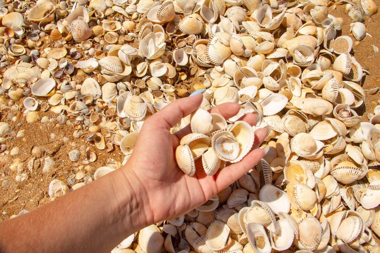 Генеральские пляжи, Крым © Фото Юрия Саранчука из группы https://vk.com/track93